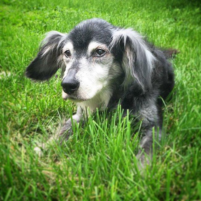 cachorros-idosos-adotados-19