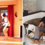 cachorros-idosos_dest