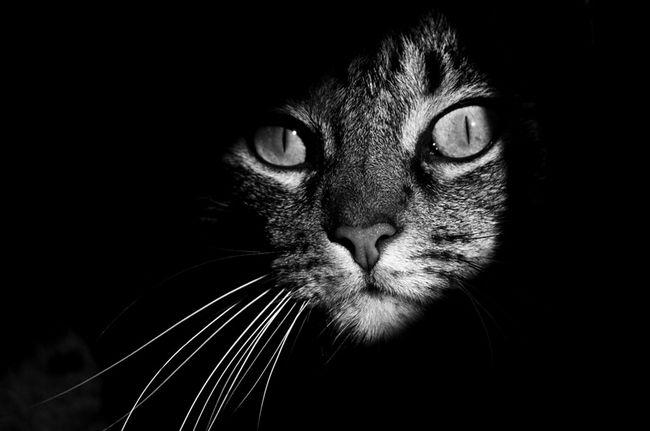 fotos-gatos-preto-branco-10