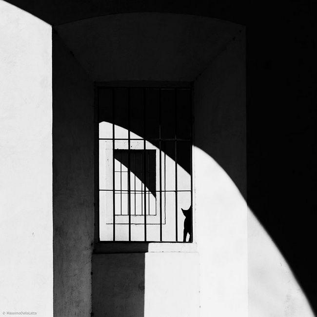 fotos-gatos-preto-branco-11