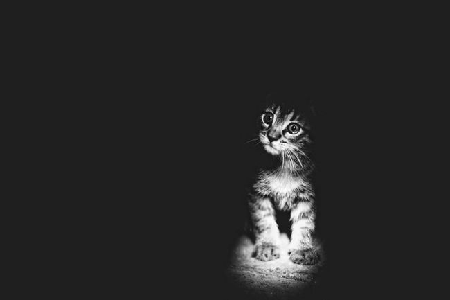 fotos-gatos-preto-branco-12