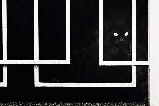 fotos-gatos-preto-branco-15
