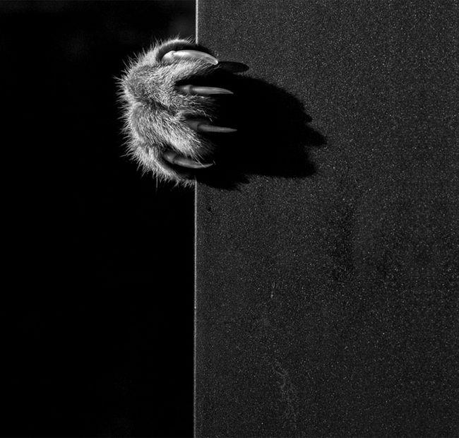 fotos-gatos-preto-branco-2