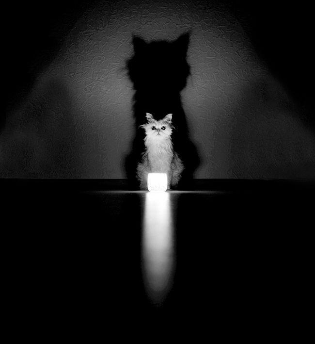 fotos-gatos-preto-branco-3