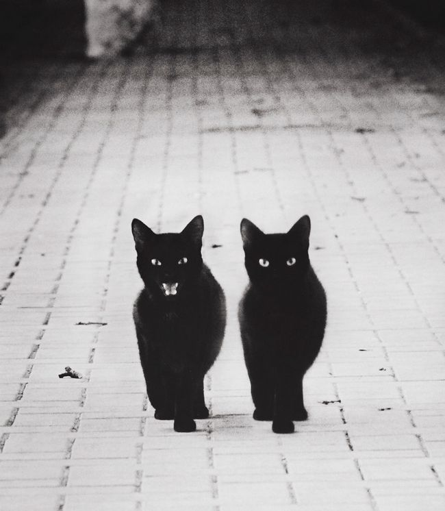 fotos-gatos-preto-branco-4