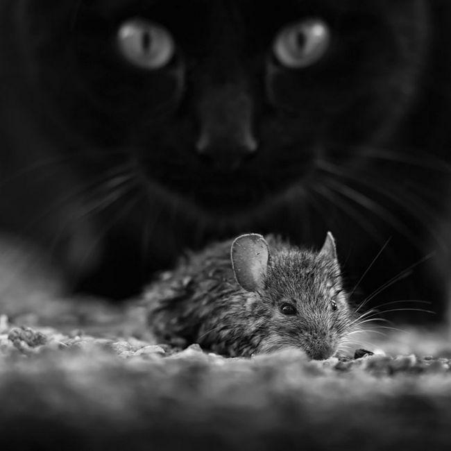 fotos-gatos-preto-branco-5