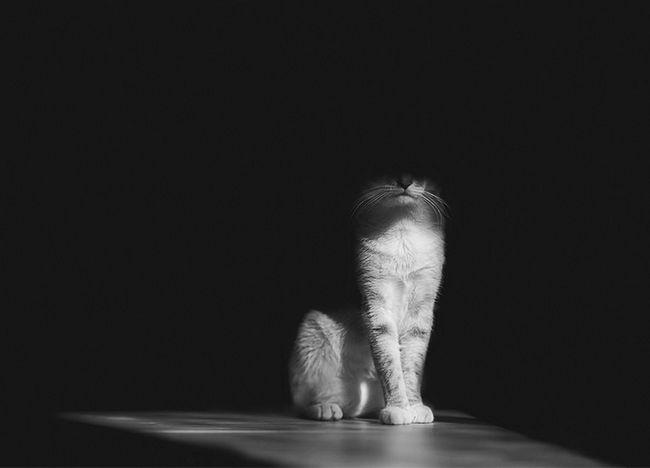 fotos-gatos-preto-branco-6