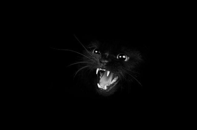 fotos-gatos-preto-branco-7