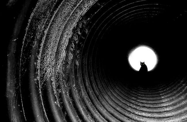fotos-gatos-preto-branco-8