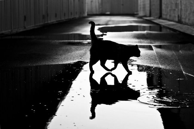 fotos-gatos-preto-branco-9
