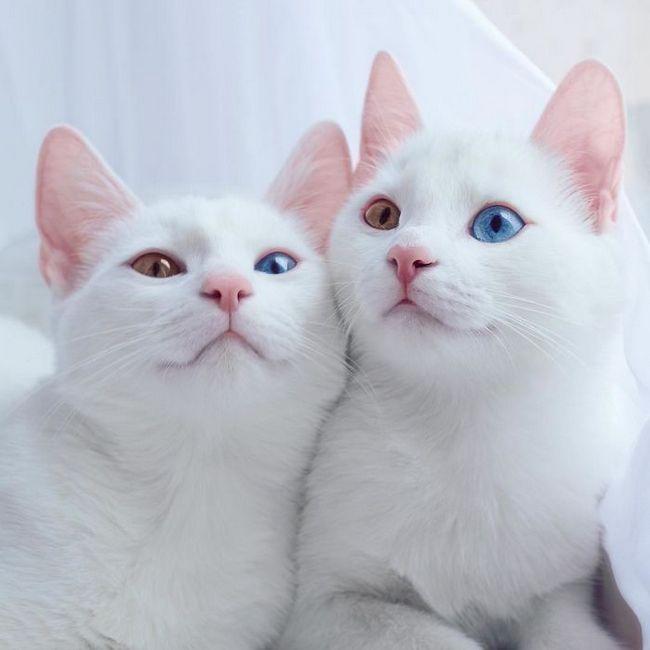 gatos-gemeos-1