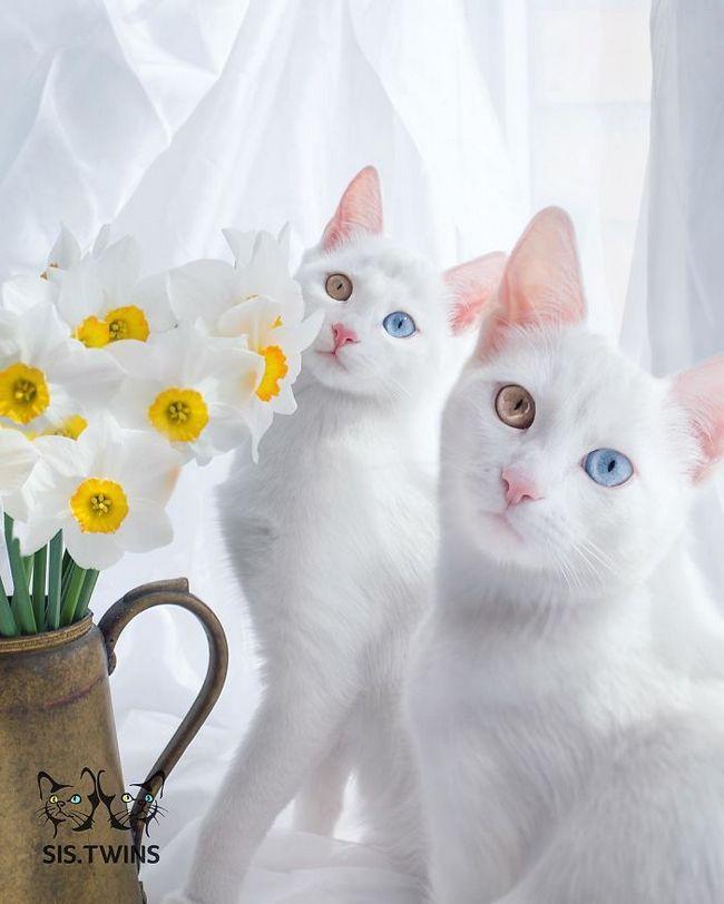gatos-gemeos-2