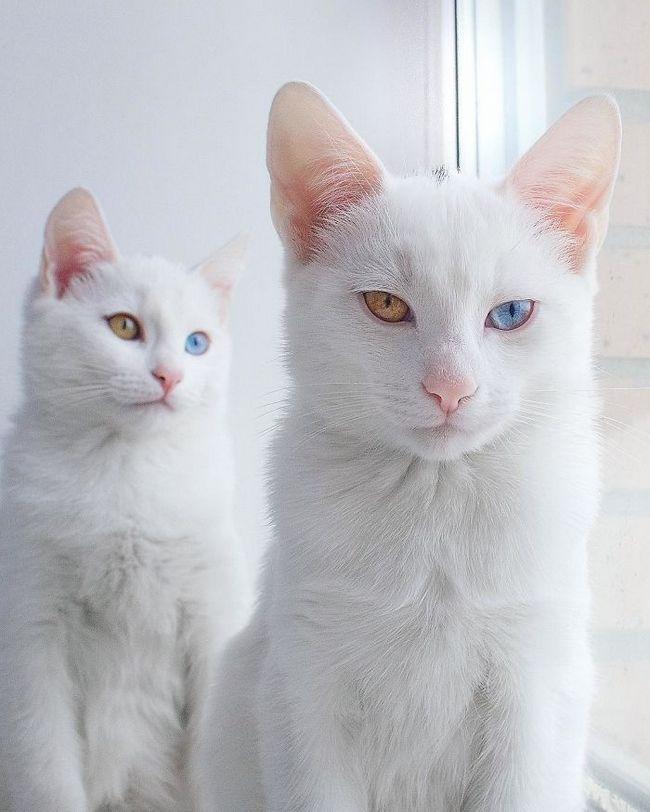 gatos-gemeos-3