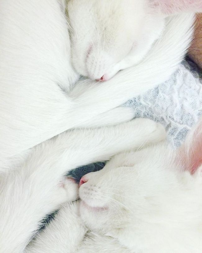 gatos-gemeos-x