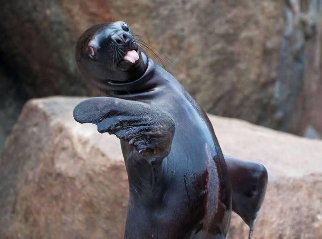 animais-mostrando-lingua-12