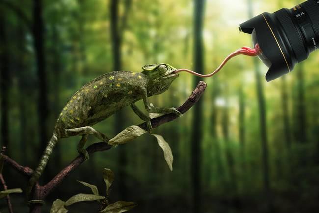 animais-mostrando-lingua-14