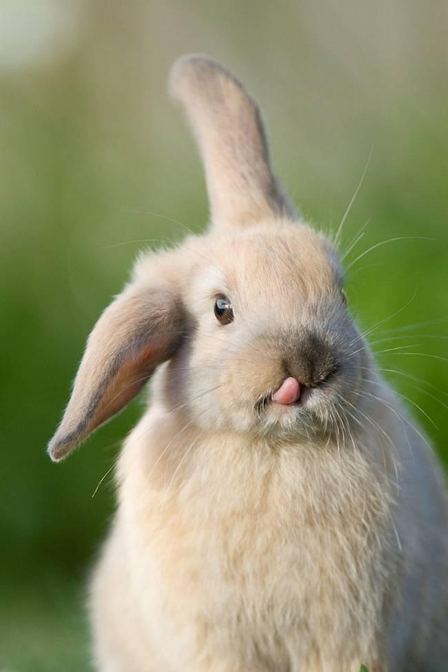 animais-mostrando-lingua-17