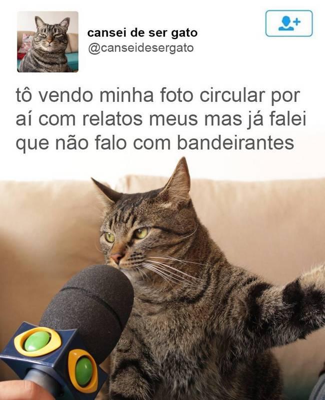 Gato (10)