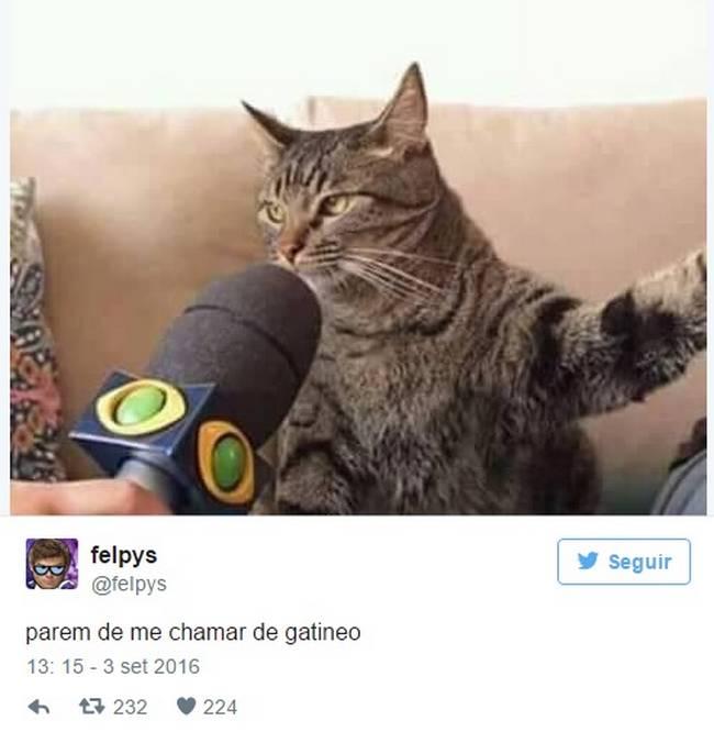 Gato (11)