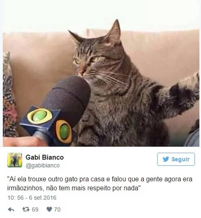 Gato (4)