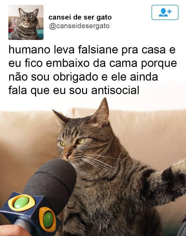 Gato (5)