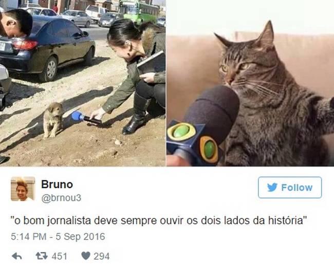 Gato (7)