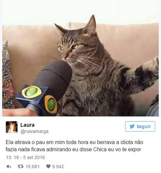 Gato (8)