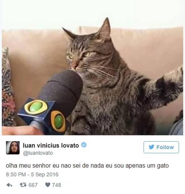 Gato (9)