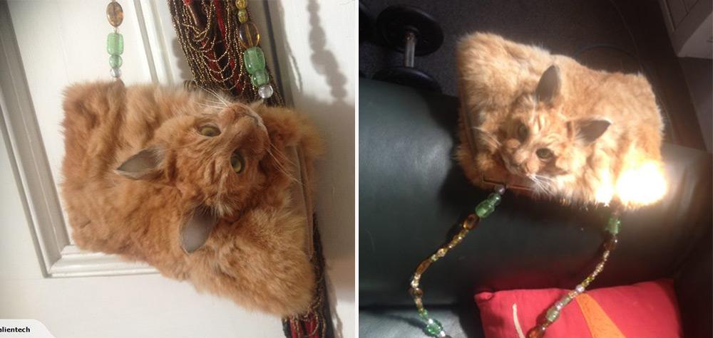 gato-bolsa-destaque