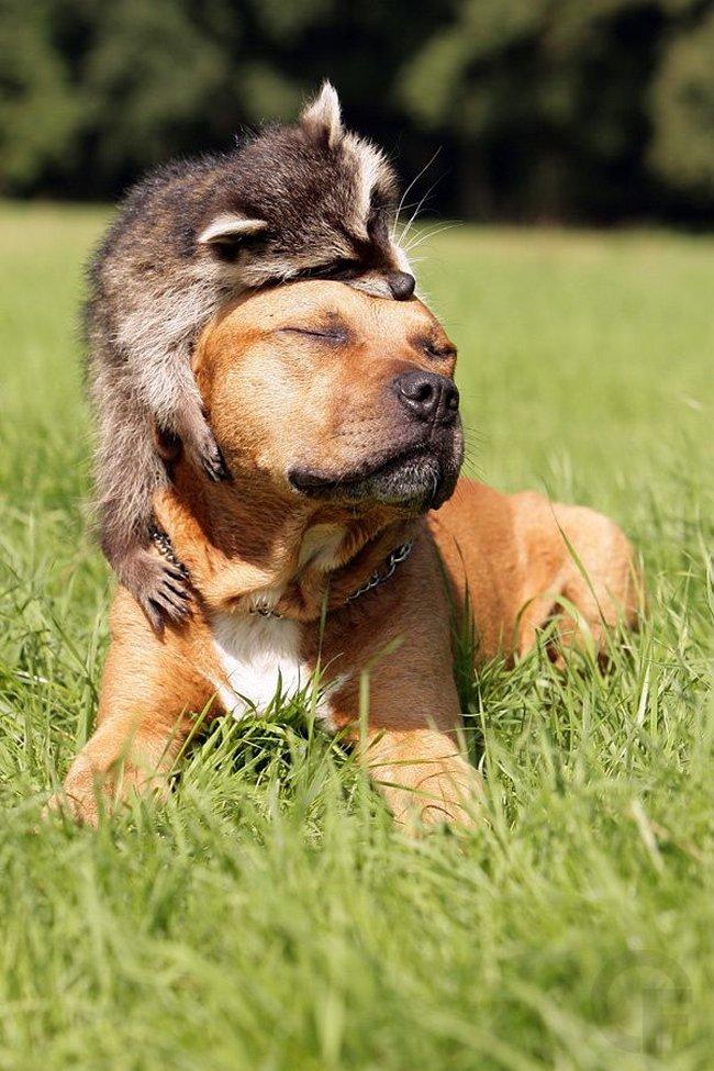 18 Lindos exemplos de amizade entre diferentes espécies de