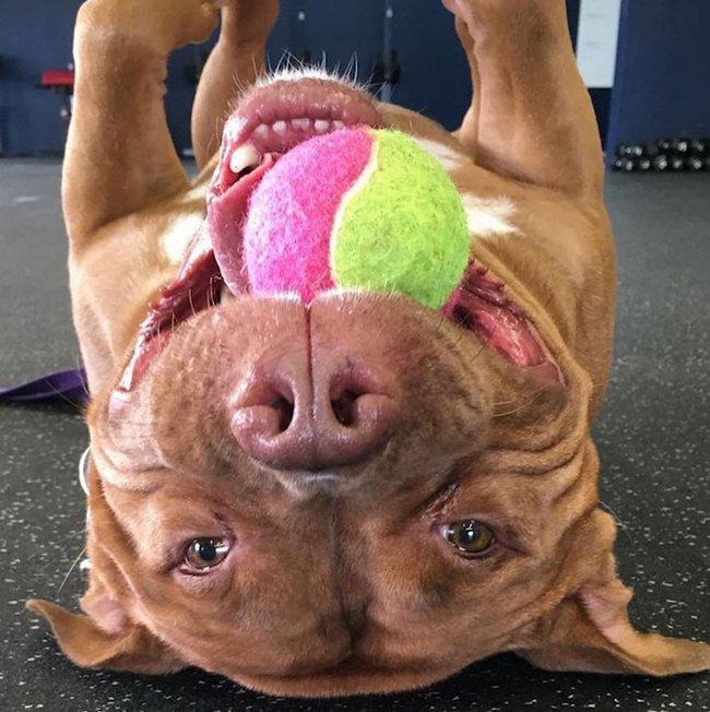 cachorro-sorridente-1