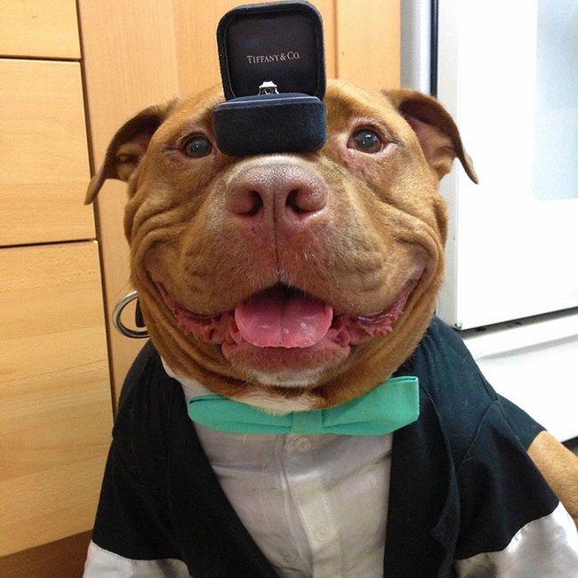 cachorro-sorridente-4