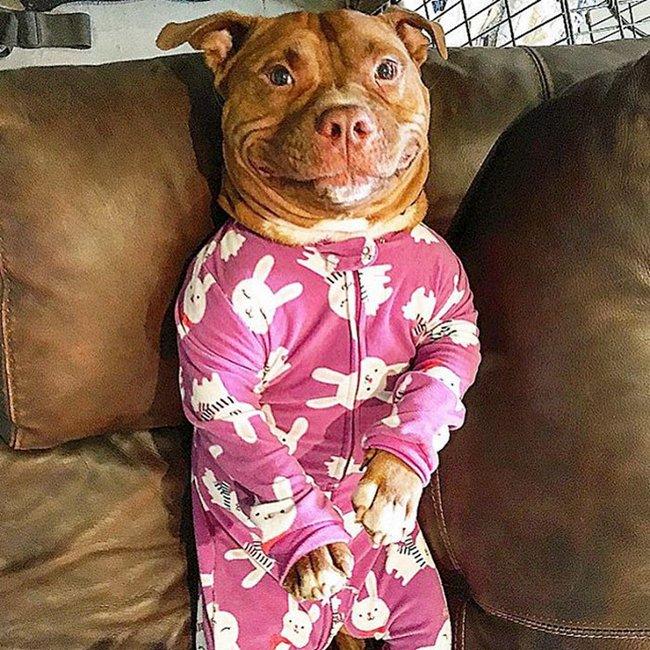 cachorro-sorridente-7