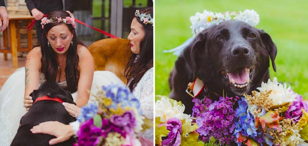cachorro-vive-casamento_dest