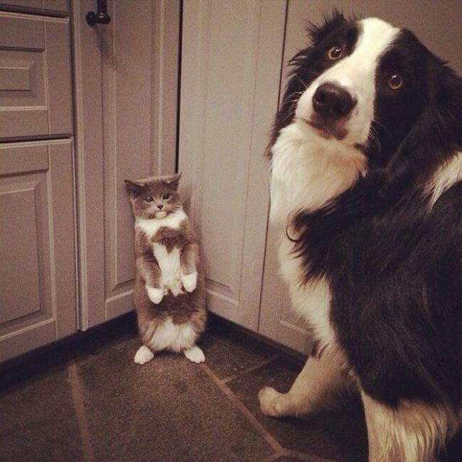 cachorros-culpados-1