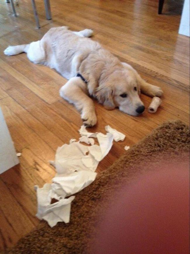 cachorros-culpados-12