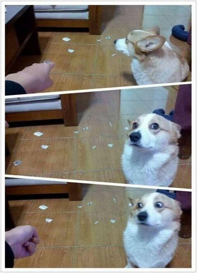cachorros-culpados-15