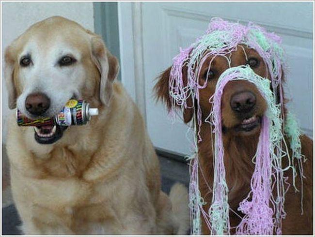 cachorros-culpados-18