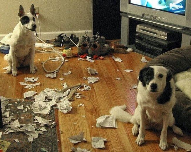 cachorros-culpados-2