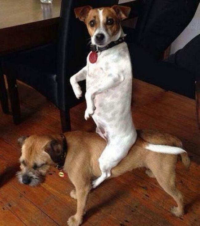cachorros-culpados-3