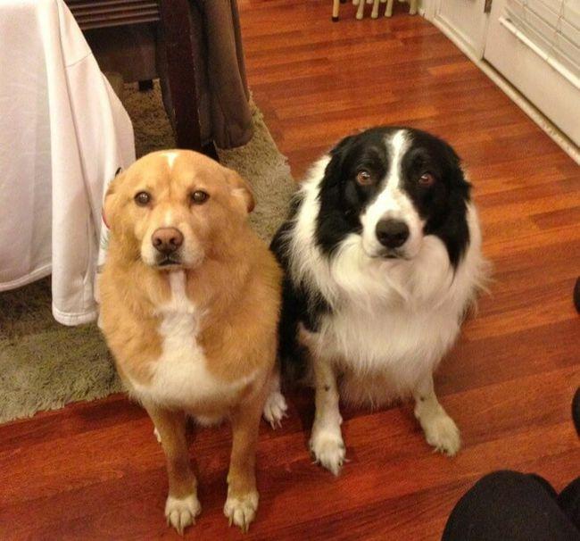 cachorros-culpados-7