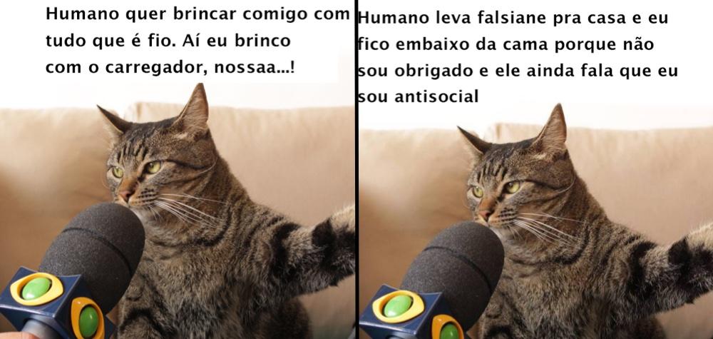 gato_meme_dest