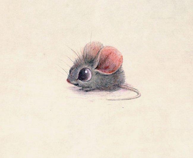 ilustracoes-de-animais-13