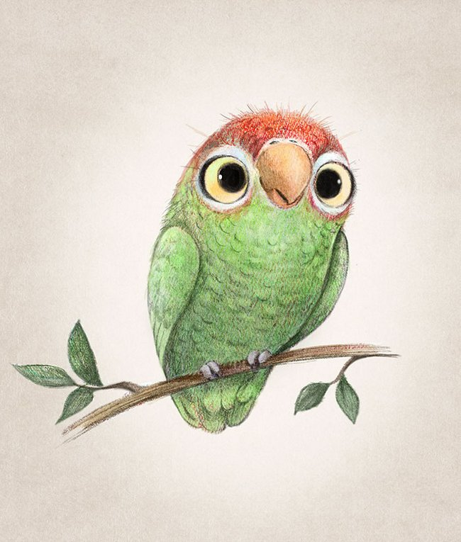 ilustracoes-de-animais-19