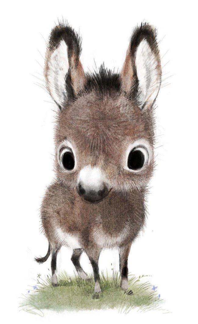 ilustracoes-de-animais-4