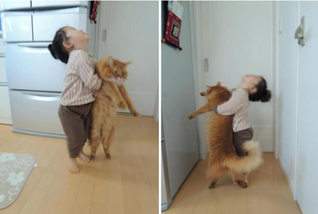 reações-de-gatos-13