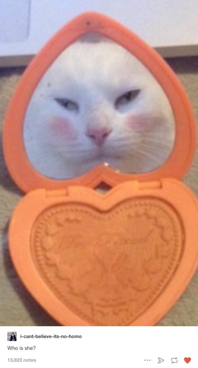 reações-de-gatos-15