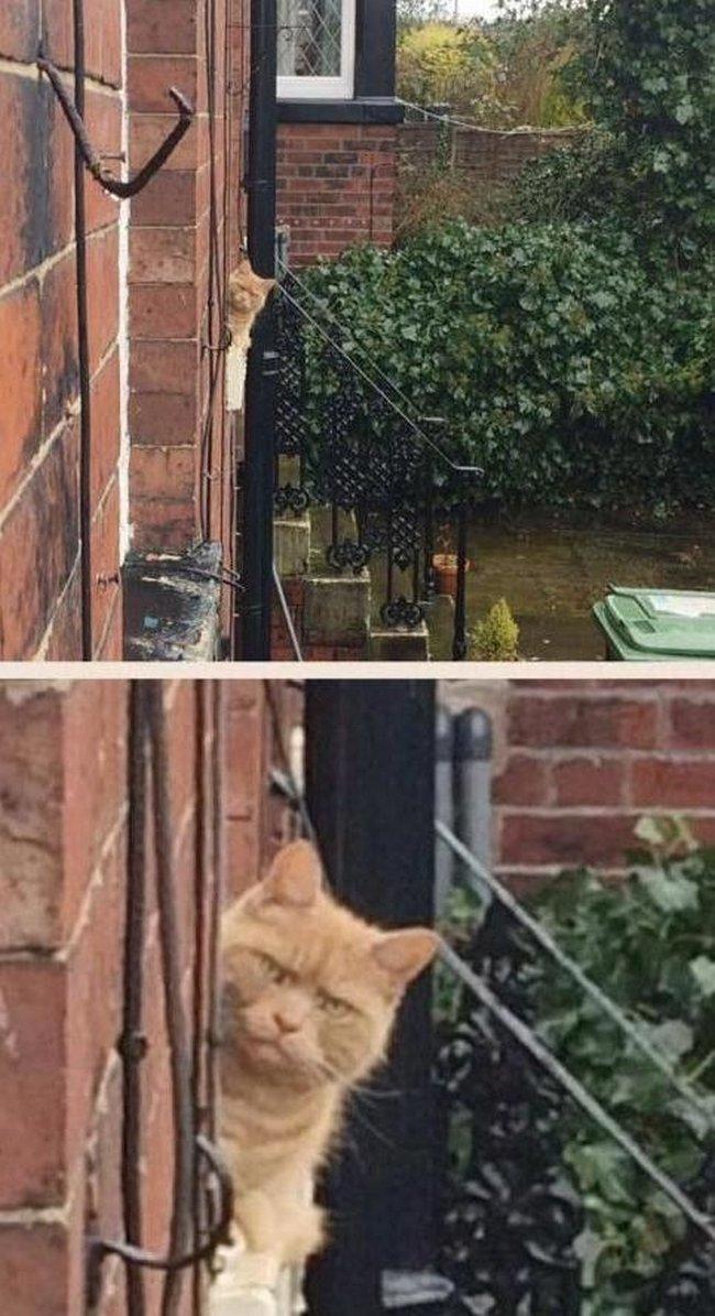 reações-de-gatos-16