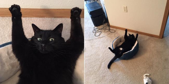 reações-de-gatos-19