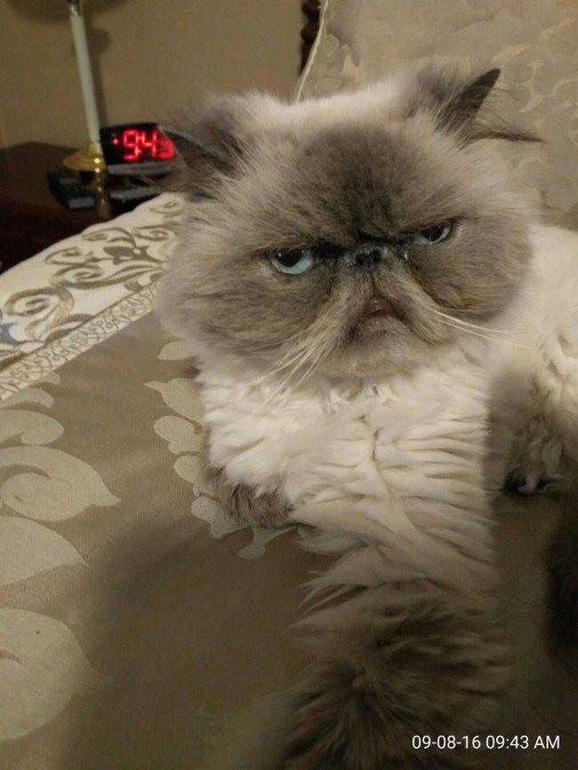 reações-de-gatos-2